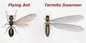 ant-vs-termite